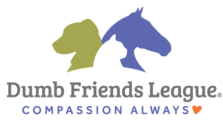 Clinical Instructor Veterinarian